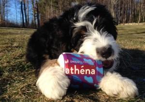 Athena Discount - ALICIA25 - Train It Right